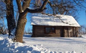 hiver, neige, arbre, cabine, paysage