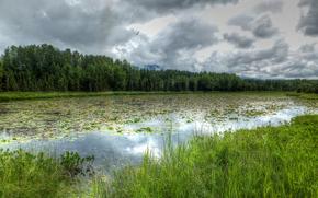lac, forêt, arbres, herbe, nuages, paysage