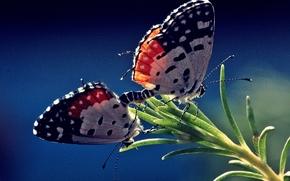 бабочки, растение, макро