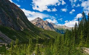 Jasper National Park, Canada, горы, деревья, пейзаж