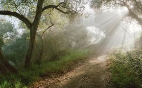 forest, pathway, Rays, sun