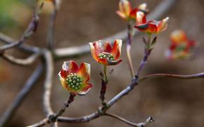 ветки, цветы, макро