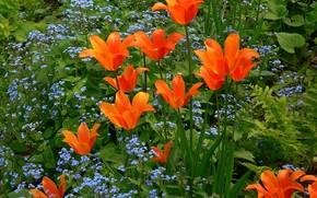 aiuola, Fiori, flora