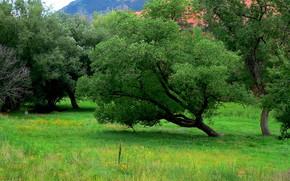 Colorado Springs, Red Rock Canyon, paesaggio