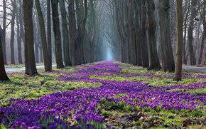 trees, park, SPRING, Crocuses, Naked, nature, Flowers
