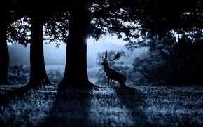 foresta, cervo, natura, mattinata