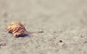 лист, сухой, поверхность, земля