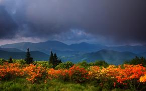 Montagne, NUVOLE, alberi, cespuglio, Fiori, paesaggio