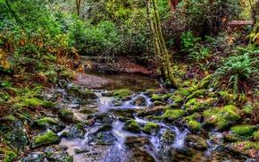 лес, речка, ручей, деревья, природа