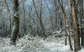 лес, деревья, зима, природа