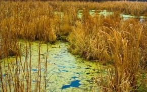 秋, 草, 沼泽