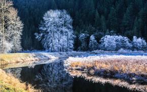 森林, 河, 树, 霜, 景观