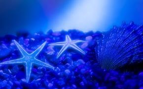 青, 水, シェル, 小惑星, 石, 海底, グロー