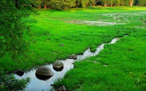 torrente, palude, alberi, natura