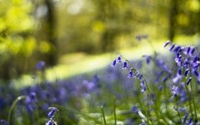 blur, glade, Bells, forest, glare, lilac, Macro, blue, bokeh, Flowers