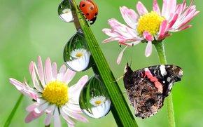 反射, 性质, 瓢虫, 滴, 花卉, 蝴蝶