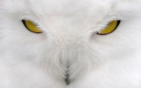 bho, ver, Color blanco