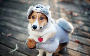 狗, 诉讼, 松鼠