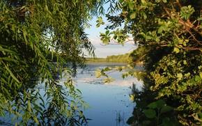 湖, 树, 性质