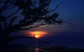 ночь, луна, дерево, птица, пейзаж