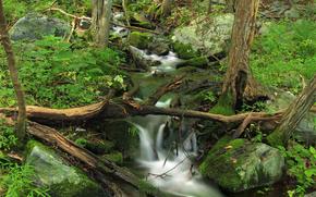 foresta, pietre, torrente, natura