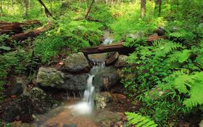 foresta, torrente, pietre, natura