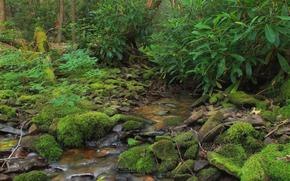森林, 溪, 石头, 性质