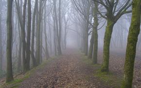 foresta, alberi, stradale, nebbia, paesaggio