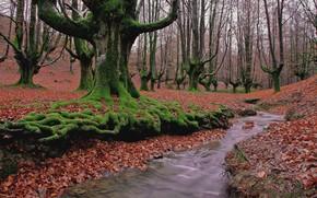 bosque, árboles, otoño, arroyo, paisaje