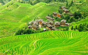 中国, 场, 丘陵, 家, 从顶视图, 景观