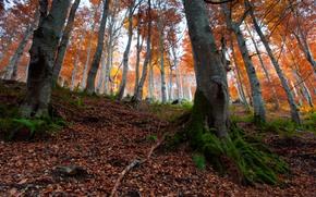 autunno, foresta, alberi, paesaggio