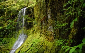 foresta, Rocce, muschio, cascata, natura