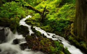 foresta, fiume, alberi, natura
