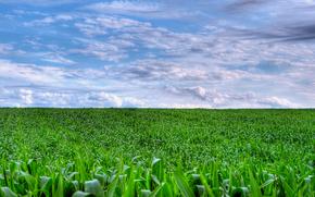 campo, cielo, paesaggio