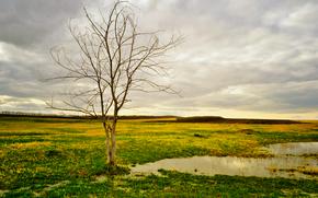 场, 水坑, 树, 景观