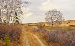 autunno, campo, alberi, stradale, paesaggio