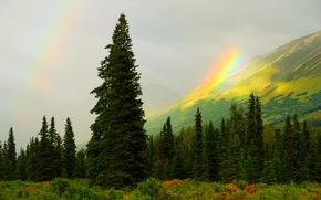 горы, лес, деревья, радуга, пейзаж