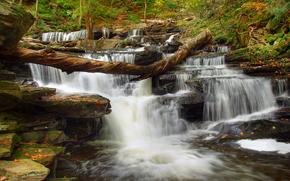 fiume, foresta, cascata, cascata, Rocce, alberi, natura