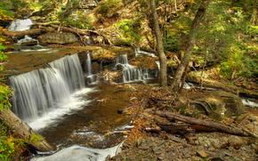 piccolo fiume, cascata, foresta, alberi, pietre, TRONCHI, natura