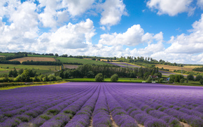 field, lavender, clouds, Шорхэм, England, Кент