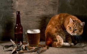 закуска, пятнично, ух-ты, пиво, кот