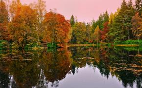 autunno, lago, foresta