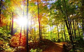осень, лес, тропа, природа, деревья, солнце, фото, лучи света