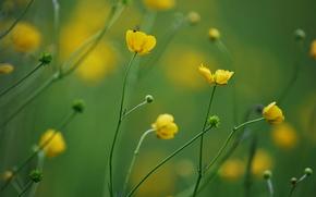 фон, желтые, размытость, цветы