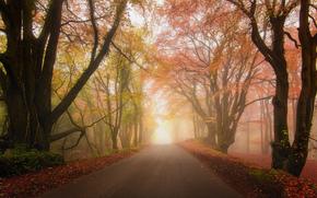 forest, fog, park, autumn, road