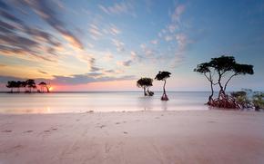 берег, море, следы, пляж, закат, горизонт, градация, солнце, деревья, корни, небо, песок, облака