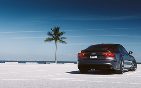 Audi, ауди, пальма