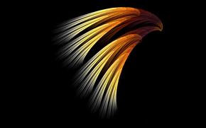 plumage, light, крыло, bird, COLOR, Rays
