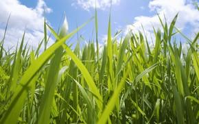 небо, трава, макро