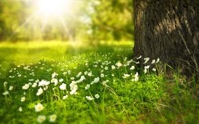 日光, フラワーズ, 夏, ツリー, 光, 林間の空き地, BARREL